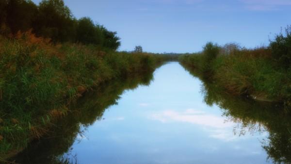 Reflexii tomnatice